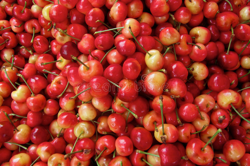 Background of red cherries royalty free stock photo