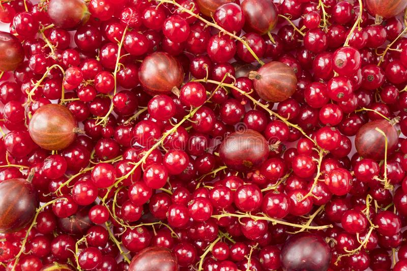 Background of red currants and red gooseberries. Fresh berries closeup. Top view. Background of fresh berries. stock photo