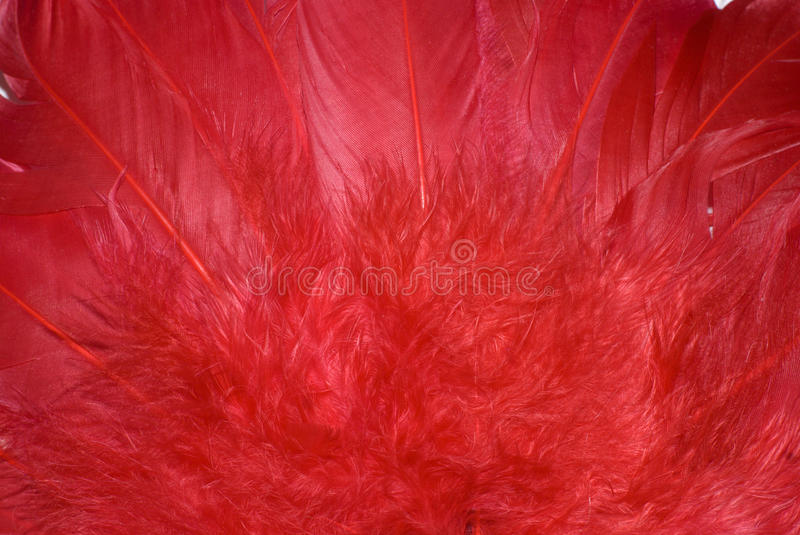 Download Background From Red Feathers Stock Image - Image: 13050677