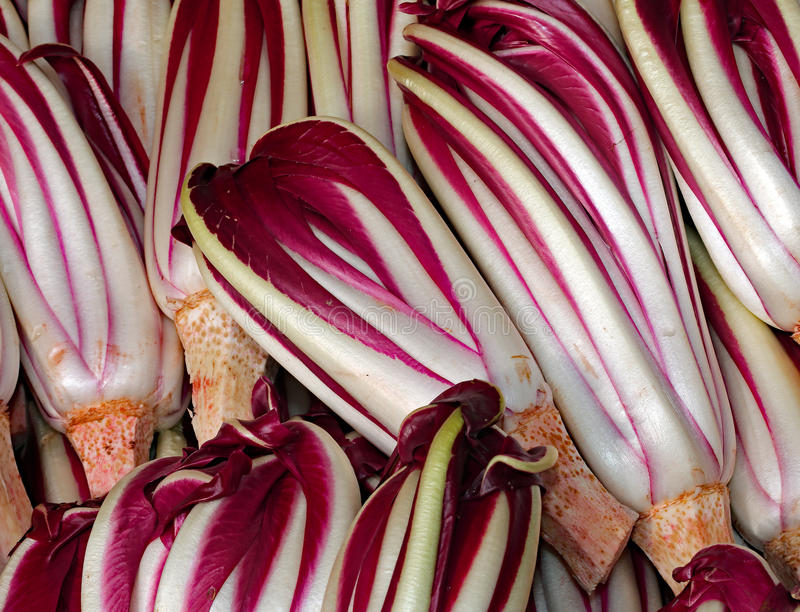 Background of red radicchio havested in the Po Valley in Italy i. Background of red ripe radicchio havested in the Po Valley in Italy royalty free stock photo