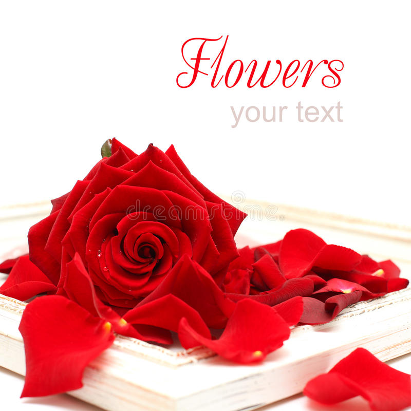 Download Background With Red Rose And Vintage Frame Stock Photo - Image: 20044512