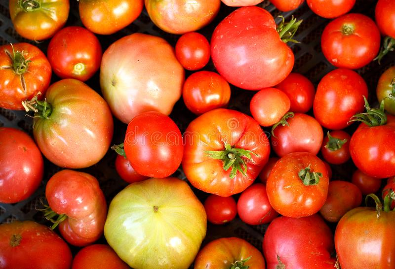 Background of red tomatoes stock photos