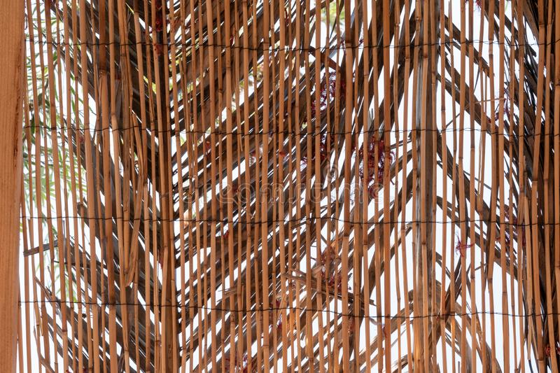 Background of reed. Reed. Traditional fence made of bamboo reed stock photo
