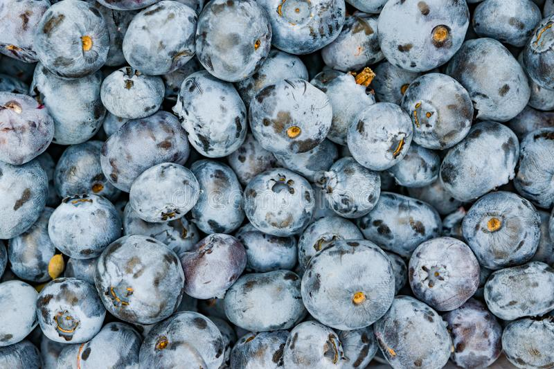 Background of ripe blue blueberry berries stock photo