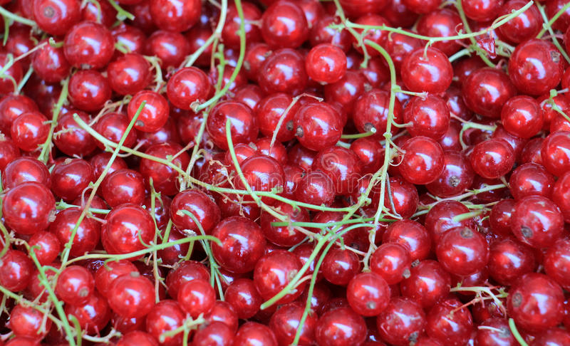 Background of ripe juicy red currant berries. top view - horizontal photo. Picture of a ripe juicy red currant berries. top view - horizontal photo stock images