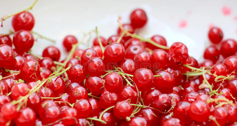 Background of ripe juicy red currant berries. top view - horizontal photo. Picture of a ripe juicy red currant berries. top view - horizontal photo royalty free stock photo