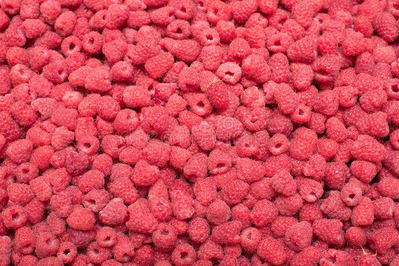 Background of ripe raspberries. Close up royalty free stock photos