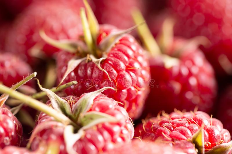 Background of ripe red raspberries, close up stock photography
