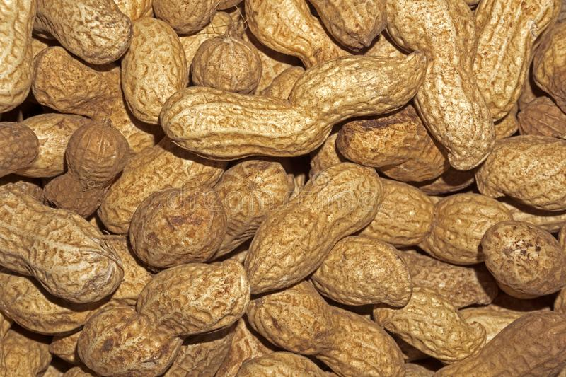 Background - uncooked inshell peanuts. Background - ripe uncooked inshell peanuts closeup royalty free stock photos