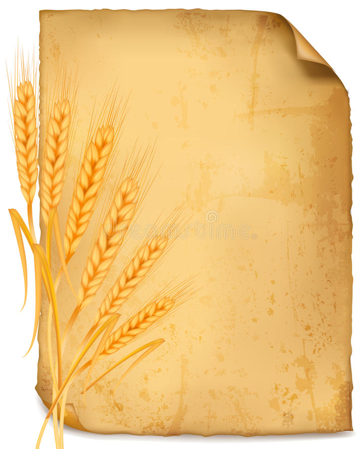Background with ripe yellow wheat ears. Agricultural vector illustration royalty free illustration