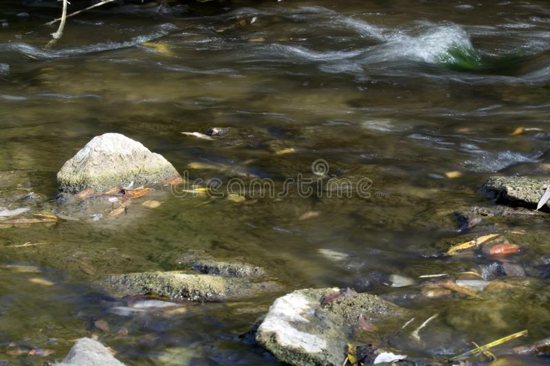 Background in the river running water through a rocky area. In the watercourse and get rapids royalty free stock photography