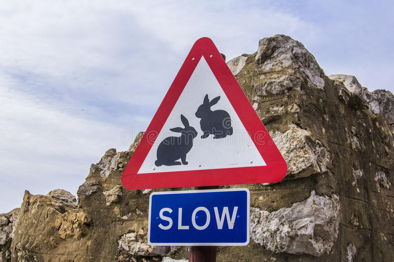 Background road sign slow with the image of animals - rabbits in Gibraltar stock photo