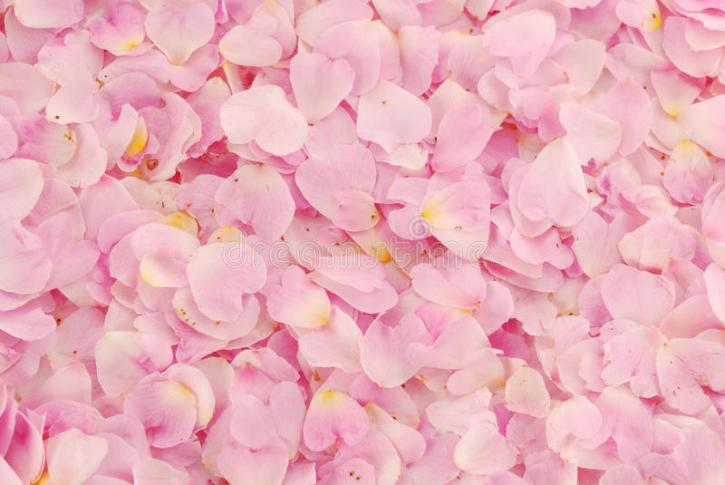 Background Of Roses Royalty Free Stock Photo