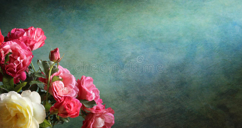 Background with roses. Green background with beautiful roses royalty free stock photography