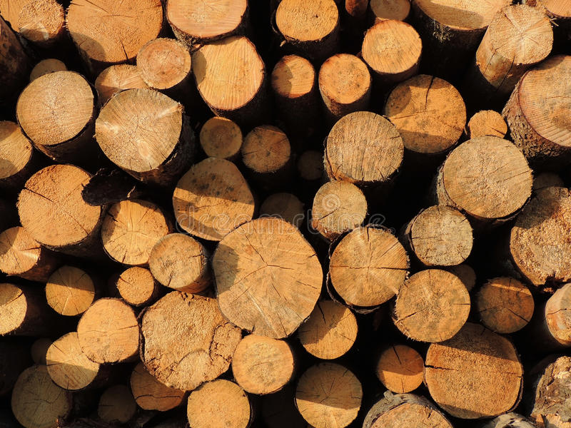 Download Background of sawn timber stock image. Image of drying - 31923231