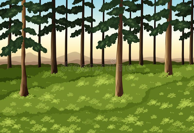 Background scene with trees in forest stock illustration