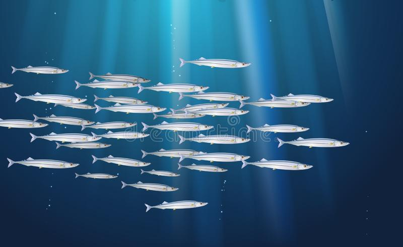 Background, school of Pacific saury, fishes marine life. Banner fresh fish, simple water inhabitants. Seafood packaging and market stock illustration