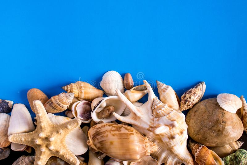 Background with sea shells and starfish. Art relax sea blue royalty free stock image