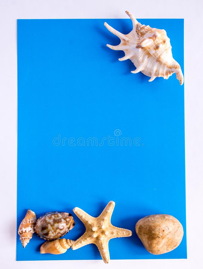 Background with sea shells and starfish. Art relax sea blue royalty free stock photo