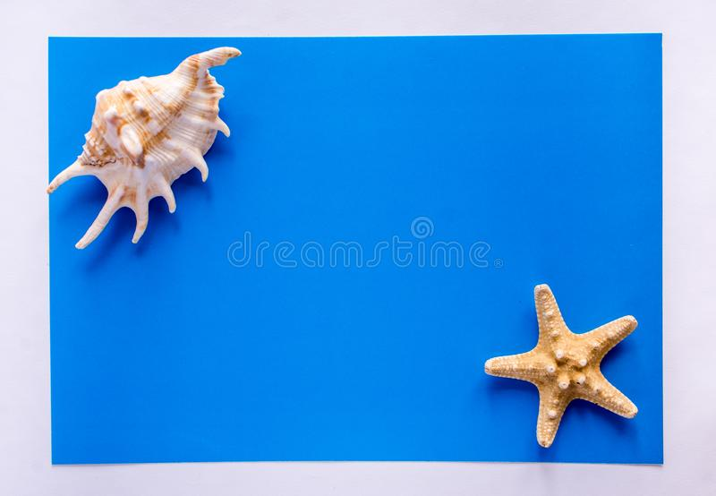 Background with sea shells and starfish. Art relax sea blue stock photography