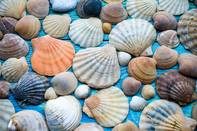 Background of sea shells on a wooden blue table stock photography