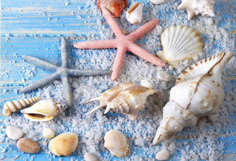 Background of seashells and starfishes on blue wooden planks stock images