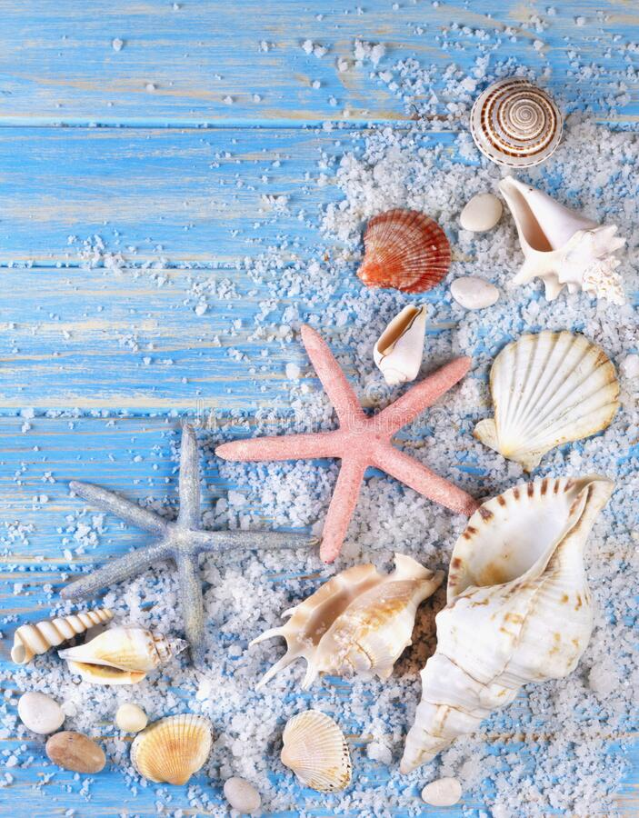 Background of seashells and starfishes on blue wooden planks stock photos