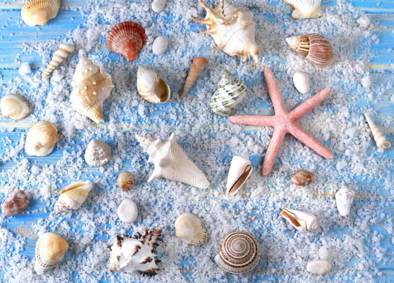 Background of seashells and starfishes on blue wooden planks royalty free stock photography