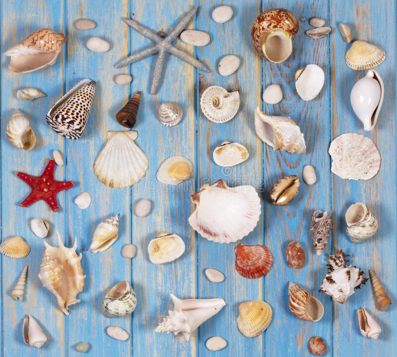 Background of seashells and starfishes. Planning summer holidays, travel and vacation background. royalty free stock photo