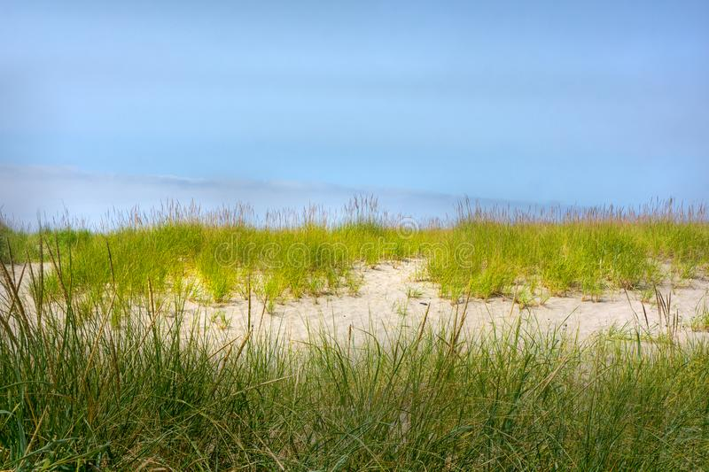 Shoreline grass border and sand dunes against blue sky royalty free stock images