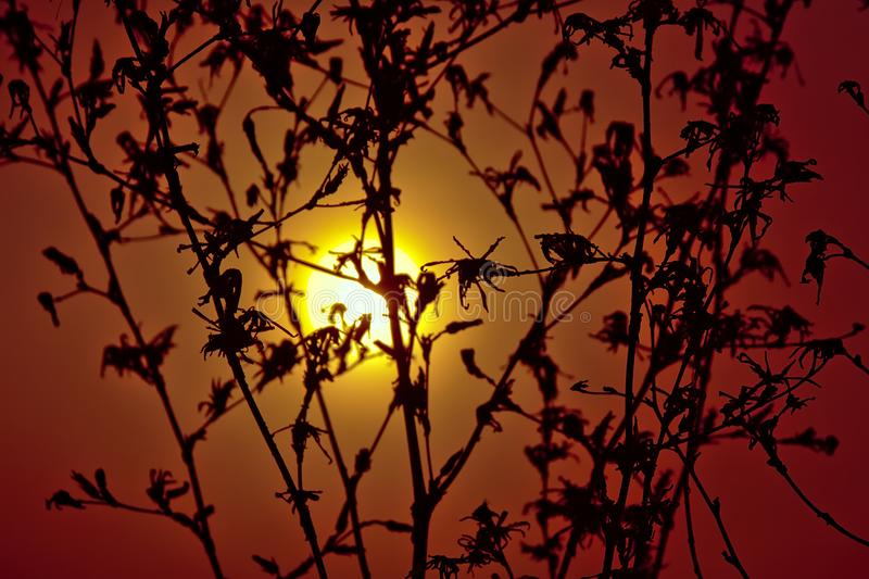Silhouette of a drid plant against the sunset with a warm orange sky royalty free stock photo