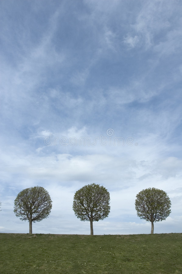 Background of sky, grass and trees stock photo