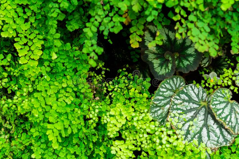 Small and large green leaves that stack to layers. Background of small and large green leaves that stack to layers royalty free stock images