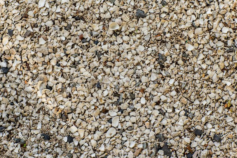 Background of small shells on the sea shore. Various small shell yard texture on the beach. royalty free stock photography