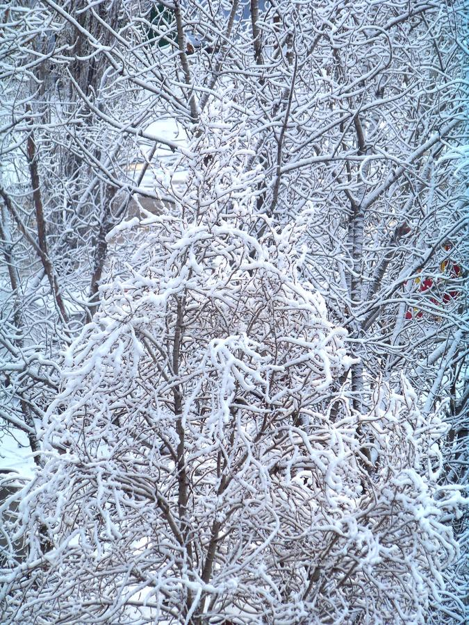 Background of snow covered trees stock photography