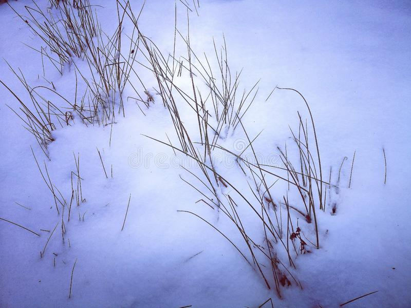 Background of snowy branches stock images