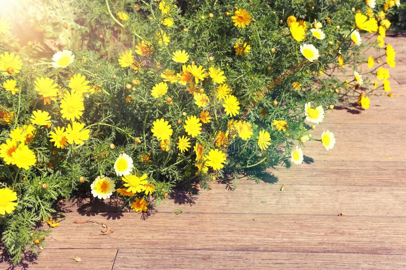 Background of spring yellow beautiful flowers. selective focus.  royalty free stock photo