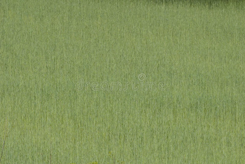 Background of Springtime Grasses stock images