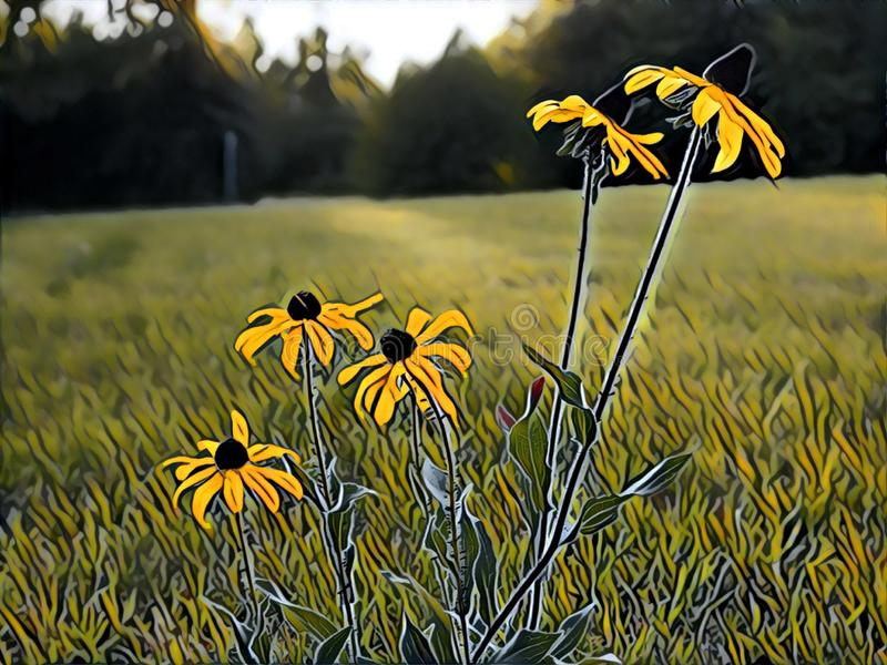 Illustration of Five Blackeyed Susans in a Freshly-Mowed Field stock images