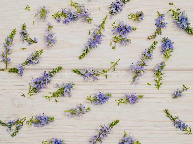 Background in the style of Provence. Delicate blue cornflowers and white wood. Beautiful delicate festive wedding background in Provencal style. Delicate field royalty free stock photography