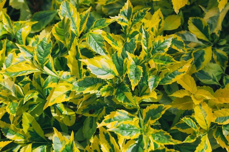 Background of summer flowers in garden outdoor nature stock photos