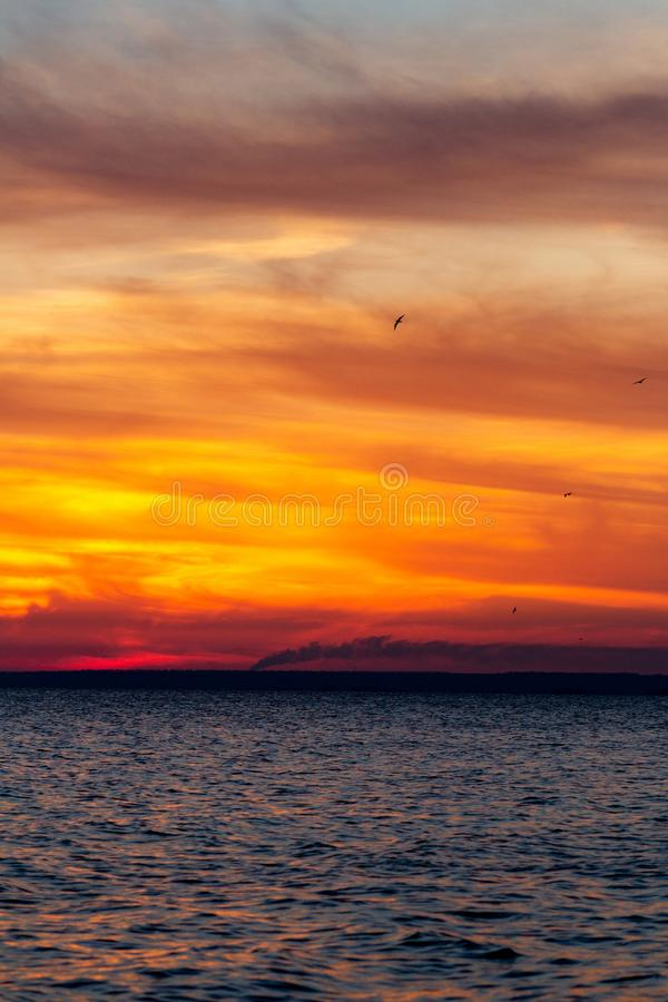 Background of sunset on the sea, birds fly among the clouds lit by the rays of the sun stock photography