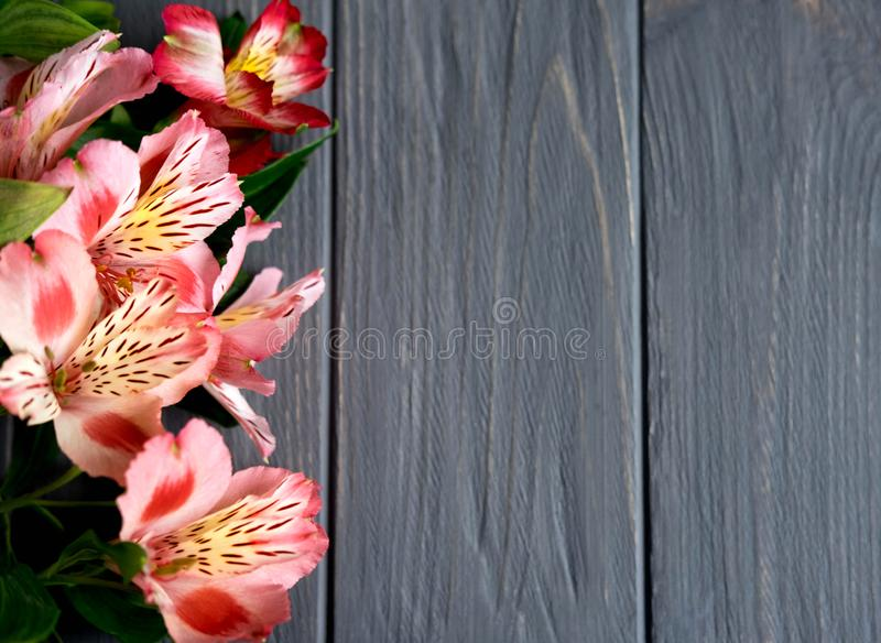 Background for text banner on a dark wooden background with pink flowers. Blank, frame for text. Greeting card design with flowers. Background for text banner on stock photography