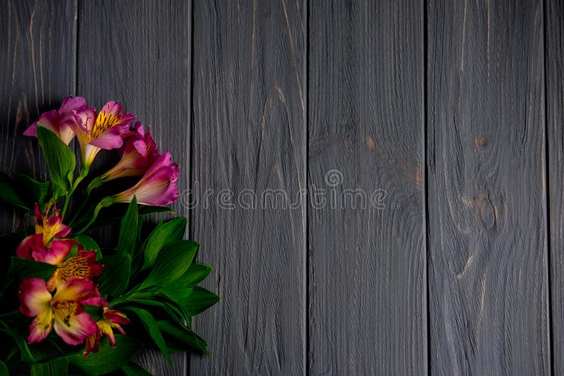Background for text banner on a dark wooden background with pink flowers. Blank, frame for text. Greeting card design with flowers. Background for text banner on royalty free stock photo