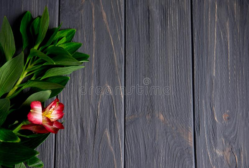 Background for text banner on a dark wooden background with red flowers. Blank, frame for text. Greeting card design with flowers. Background for text banner on royalty free stock photography