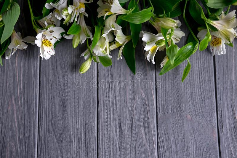 Background for text banner on a dark wooden background with white flowers. Blank, frame for text. Greeting card design with. Flowers stock images