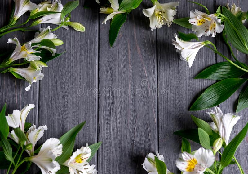Background for text banner on a dark wooden background with white flowers. Blank, frame for text. Greeting card design with. Flowers stock photography