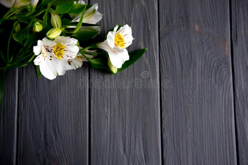 Background for text banner on a dark wooden background with white flowers. Blank, frame for text. Greeting card design with. Background for text banner on a dark royalty free stock photography