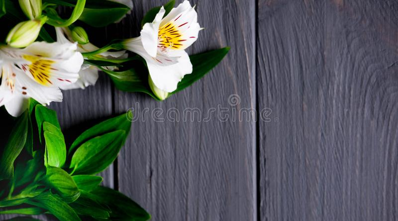 Background for text banner on a dark wooden background with white flowers. Blank, frame for text. Greeting card design with. Flowers. Aalstroemeria on wooden royalty free stock image