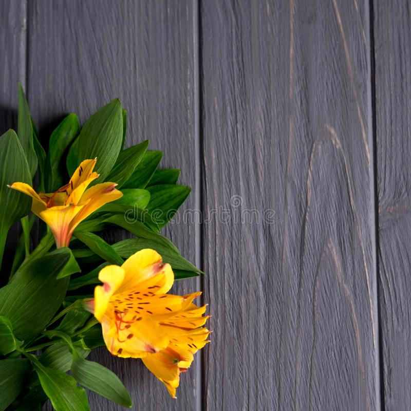Background for text banner on a dark wooden background with yellow flowers. Blank, frame for text. Greeting card design with. Flowers royalty free stock photos